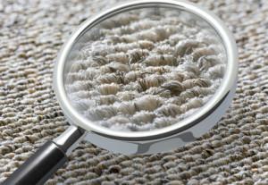 Teppichboden überprüfen