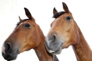 2 Pferdeköpfe