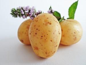 3 Kartoffeln, lila Blüte