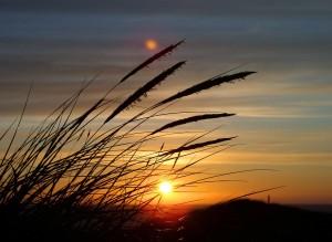 Gräser, Sonnenuntergang