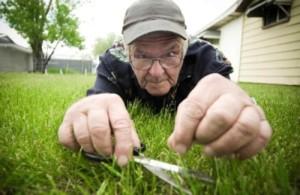 Gras schneiden
