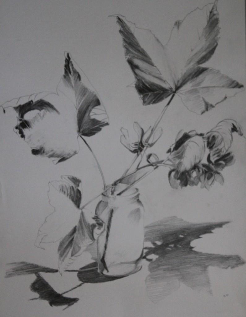 Stillleben mit Blätter, Bleistift auf Papier, 80-er Jahre, 42 x 56