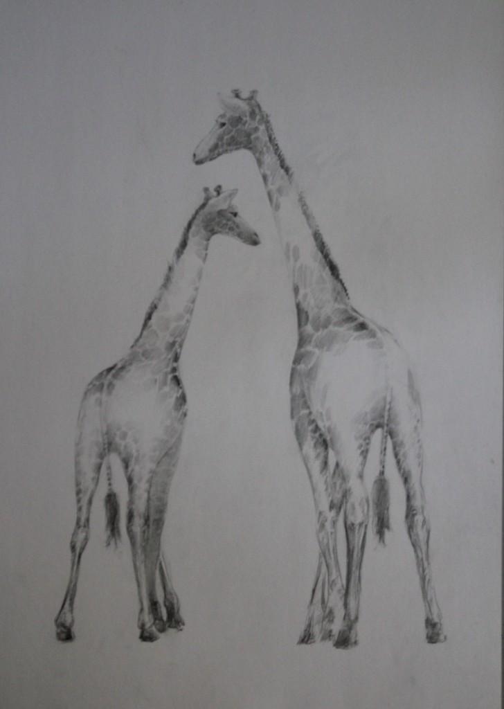 2 Giraffen, Bleistift auf Papier, 80-er Jahre, 42 x 59