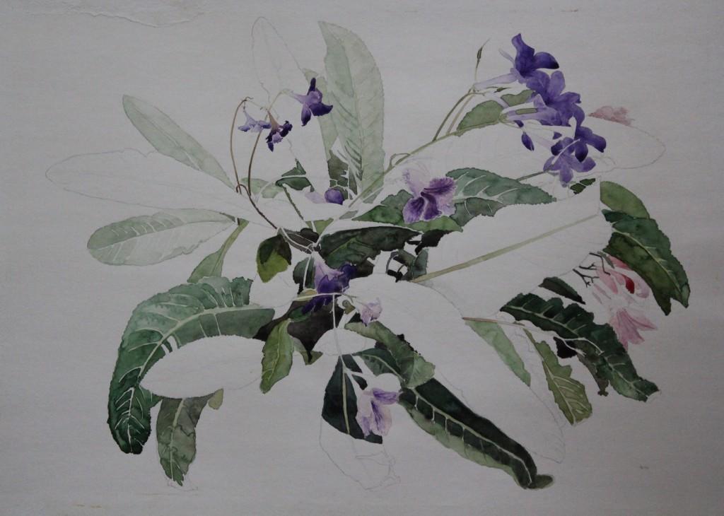Blumen, Bleistift/Aquarell, 1981, 59 x 42
