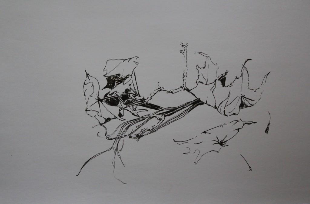 Stillleben Blätter, Feder/Tusche, 80-er Jahre, 59,5 x 42