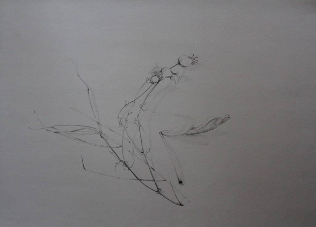 Klatschmohn, Bleistift auf Papier, 80-er Jahre, 59 x 42
