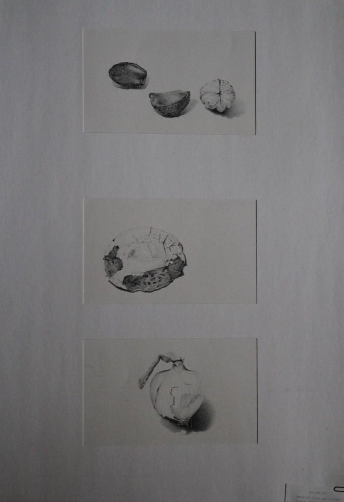 Triptychon Stillleben, Bleistift auf Papier, 80-er Jahre, 42 x 59