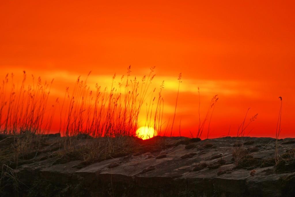 Sonnenuntergang, Gräser
