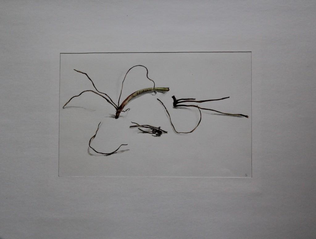 vegetabil, Aquarell, Anfang 80-er Jahre, 29 x 19