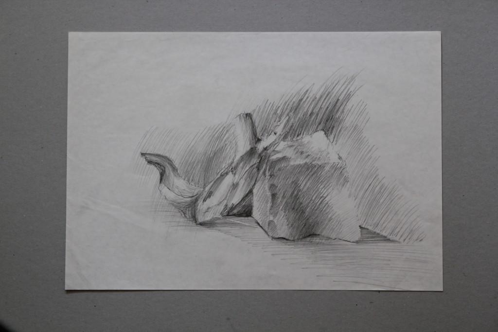Stein, Wurzel, Bleistift auf Papier, Anfang 80-er Jahre, 42 x 29