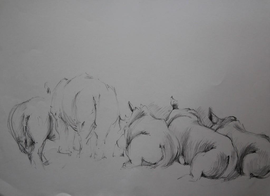 Nashörner, Bleistift auf Papier, Anfang 80-er Jahre, 56 x 42