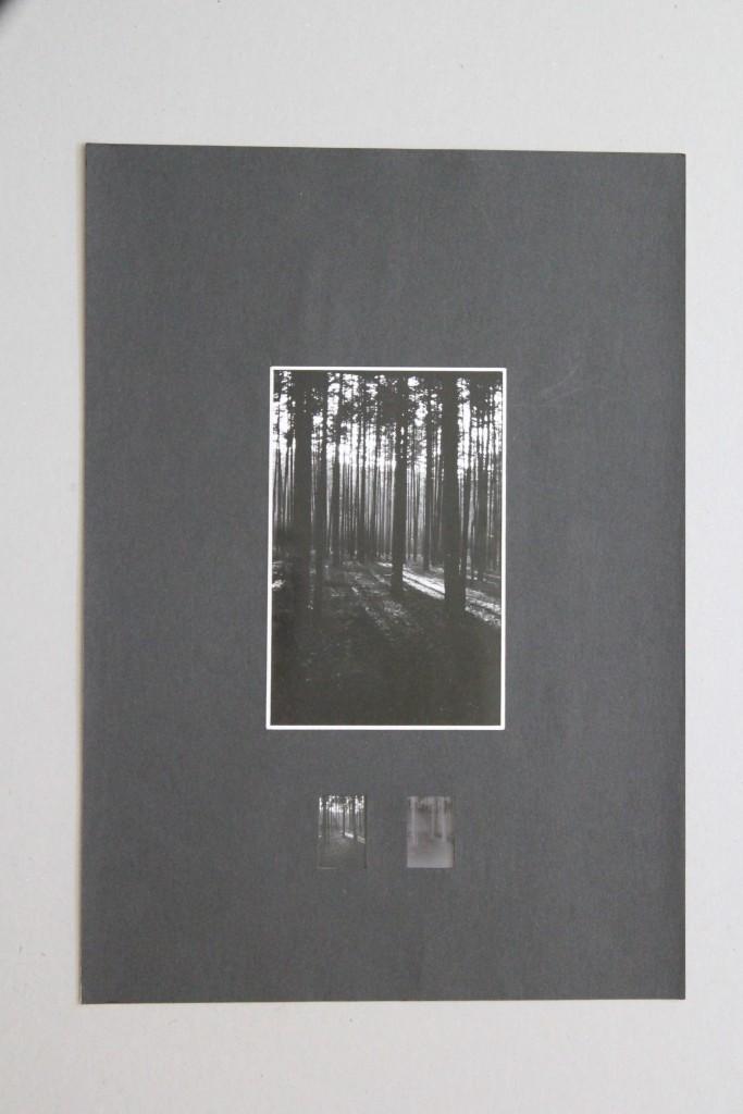Wald, Fotografie, Anfang 80-er Jahre, 12 x 18