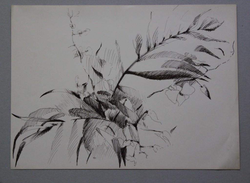 Pflanze, Feder/Tinte auf Papier, 1980, 45 x 33