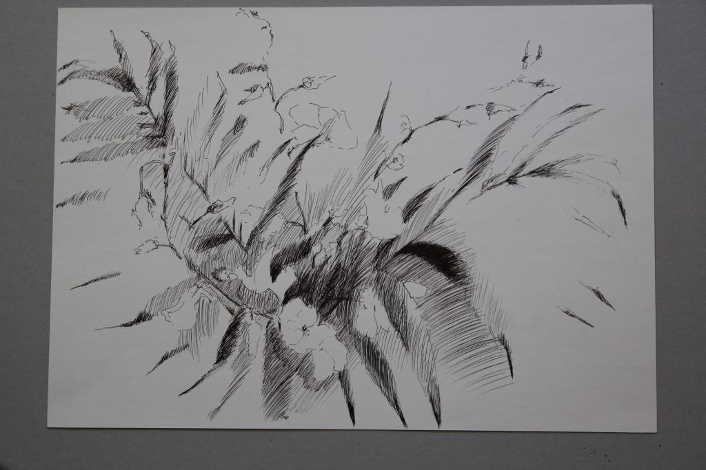 Pflanze, Feder/Tusche auf Papier, Anfang 80-er Jahre, 47,5 x 33,5
