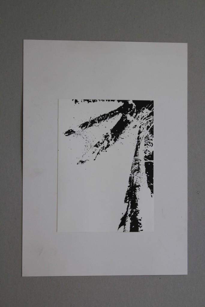 Bäume, Fotografie, Ende 70-er Jahre